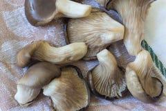 Ανάμεικτα μανιτάρια στρειδιών ostreatus Pleurotus, στη ριγωτή πετσέτα τσαγιού Στοκ εικόνα με δικαίωμα ελεύθερης χρήσης