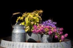 Ανάμεικτα λουλούδια στα δοχεία και τους κάδους αργιλίου Στοκ φωτογραφία με δικαίωμα ελεύθερης χρήσης