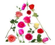 ανάμεικτα τριαντάφυλλα π&ups στοκ εικόνες με δικαίωμα ελεύθερης χρήσης