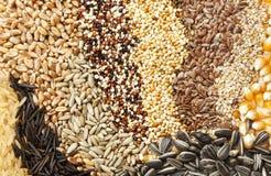 ανάμεικτοι σπόροι σιταριώ& στοκ εικόνα με δικαίωμα ελεύθερης χρήσης