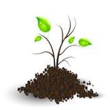 ανάπλαση φυτών διανυσματική απεικόνιση