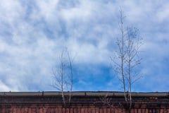 Ανάπτυξη δέντρων από την υδρορροή βροχής Στοκ Φωτογραφία