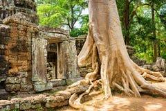 Ανάπτυξη δέντρων μεταξύ των καταστροφών του ναού TA Prohm σε Angkor, Καμπότζη Στοκ Εικόνες