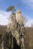 Ανάπτυξη δέντρων πεύκων στον απότομο βράχο Στοκ Εικόνα