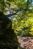 Ανάπτυξη δέντρων στο βράχο Στοκ εικόνες με δικαίωμα ελεύθερης χρήσης