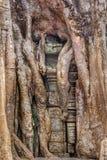 Ανάπτυξη δέντρων Strangulosa Banyan Ficus πέρα από μια πόρτα στο anci Στοκ εικόνες με δικαίωμα ελεύθερης χρήσης