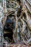 Ανάπτυξη δέντρων Strangulosa Banyan Ficus πέρα από μια πόρτα στο anci Στοκ φωτογραφία με δικαίωμα ελεύθερης χρήσης