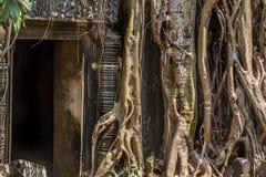 Ανάπτυξη δέντρων Strangulosa Banyan Ficus πέρα από μια πόρτα στο anci Στοκ Φωτογραφία