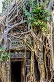 Ανάπτυξη δέντρων Strangulosa Banyan Ficus πέρα από μια πόρτα στο anci Στοκ Εικόνες