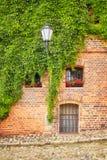 Ανάπτυξη αμπέλων και κισσών σε έναν παλαιό τουβλότοιχο οικοδόμησης Στοκ εικόνα με δικαίωμα ελεύθερης χρήσης