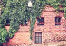 Ανάπτυξη αμπέλων και κισσών σε έναν παλαιό τουβλότοιχο οικοδόμησης Στοκ Εικόνες