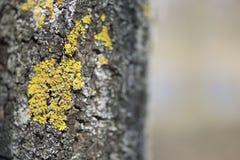 Ανάπτυξη βρύου και λειχήνων στο φλοιό ενός δέντρου Στοκ φωτογραφία με δικαίωμα ελεύθερης χρήσης