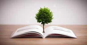 Ανάπτυξη δέντρων από ένα ανοικτό βιβλίο Στοκ εικόνες με δικαίωμα ελεύθερης χρήσης