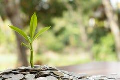 Ανάπτυξη δέντρων από το σωρό των συσσωρευμένων νομισμάτων μερών με το θολωμένο υπόβαθρο, σωρός χρημάτων για την επένδυση επιχειρη στοκ εικόνες