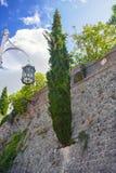 Ανάπτυξη δέντρων κυπαρισσιών από έναν τοίχο πετρών Παλαιά κωμόπολη στο φραγμό Μαυροβούνιο πόλεων στοκ εικόνα