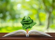 Ανάπτυξη εγγράφου δέντρων από το βιβλίο στον πίνακα Στοκ Εικόνες