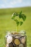 Ανάπτυξη εγκαταστάσεων στο βάζο γυαλιού νομισμάτων για τα χρήματα στην πράσινη χλόη Στοκ φωτογραφία με δικαίωμα ελεύθερης χρήσης