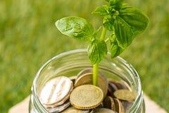 Ανάπτυξη εγκαταστάσεων στο βάζο γυαλιού νομισμάτων για τα χρήματα στην πράσινη χλόη Στοκ Φωτογραφία