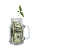 Ανάπτυξη εγκαταστάσεων στο βάζο με τα δολάρια στο άσπρο υπόβαθρο Στοκ Εικόνες