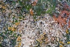 Ανάπτυξη λειχήνων και βρύου στην γκρίζα πέτρα Στοκ φωτογραφίες με δικαίωμα ελεύθερης χρήσης