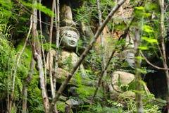 Ανάπτυξη λειχήνων στο βουδισμό Στοκ Εικόνες