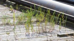 Ανάπτυξη ζιζανίων σε ένα παλαιό λιμάνι Στοκ εικόνες με δικαίωμα ελεύθερης χρήσης