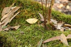 Ανάπτυξη ζωής από το πεσμένο κούτσουρο δέντρων Στοκ εικόνα με δικαίωμα ελεύθερης χρήσης