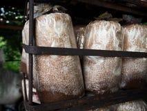 Ανάπτυξη καλλιέργειας μανιταριών στο αγρόκτημα Στοκ φωτογραφίες με δικαίωμα ελεύθερης χρήσης