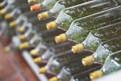Ανάπτυξη καλλιεργειών ιστού ορχιδεών σε ένα μπουκάλι Στοκ Εικόνες