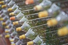 Ανάπτυξη καλλιεργειών ιστού ορχιδεών σε ένα μπουκάλι Στοκ Εικόνα