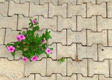 Ανάπτυξη λουλουδιών από τα κεραμίδια στοκ φωτογραφία
