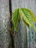 Ανάπτυξη μέσω του φράκτη Στοκ φωτογραφία με δικαίωμα ελεύθερης χρήσης
