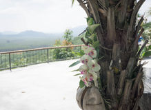 Ανάπτυξη ορχιδεών στο δέντρο στην Ταϊλάνδη Στοκ Εικόνες