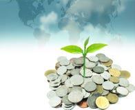 Ανάπτυξη πράσινων εγκαταστάσεων στα νομίσματα χρημάτων κάτω από το υπόβαθρο παγκόσμιων χαρτών Στοκ Φωτογραφία