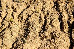 Ανάπτυξη στο ξηρό χώμα Στοκ Εικόνες