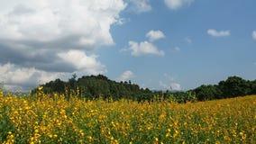 Ανάπτυξη της κάνναβης Sunn ή του juncea Crotalaria φιλμ μικρού μήκους