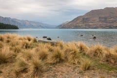 Ανάπτυξη τουφών χόρτου στη λίμνη Wakatipu Στοκ Εικόνες