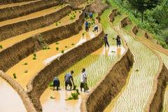 Ανάπτυξη του ρυζιού στη MU Cang Chai, γεν Bai, Βιετνάμ Στοκ εικόνα με δικαίωμα ελεύθερης χρήσης
