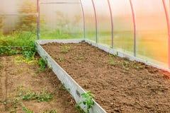 Ανάπτυξη των λαχανικών σε ένα θερμοκήπιο στη χώρα Υψηλός κήπος για τη φύτευση των λαχανικών στοκ φωτογραφία με δικαίωμα ελεύθερης χρήσης