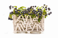 Ανάπτυξη φρούτων του Blackberry στον κλάδο Στοκ Φωτογραφίες