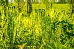 ανάπτυξη φτερών στο θερινό δάσος Στοκ φωτογραφίες με δικαίωμα ελεύθερης χρήσης