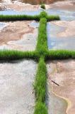 Ανάπτυξη χλόης πράσινη Στοκ εικόνα με δικαίωμα ελεύθερης χρήσης