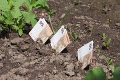 Ανάπτυξη χρημάτων. Στοκ Εικόνα