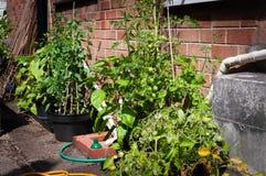 Ανάπτυξη veg στα εμπορευματοκιβώτια Στοκ εικόνα με δικαίωμα ελεύθερης χρήσης