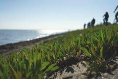 Ανάχωμα Βόρεια Θαλασσών στοκ εικόνα με δικαίωμα ελεύθερης χρήσης