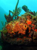 ανάχωμα κοραλλιών Στοκ φωτογραφία με δικαίωμα ελεύθερης χρήσης