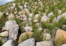 Ανάχωμα που καλύπτεται πετρώδες με την αλογουρά Equisetum Στοκ φωτογραφία με δικαίωμα ελεύθερης χρήσης