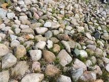 Ανάχωμα που καλύπτεται πετρώδες με την αλογουρά Equisetum Στοκ εικόνα με δικαίωμα ελεύθερης χρήσης