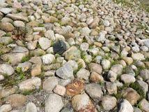 Ανάχωμα που καλύπτεται πετρώδες με την αλογουρά Equisetum Στοκ εικόνες με δικαίωμα ελεύθερης χρήσης