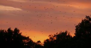 Ανήσυχα πουλιά στον ουρανό απόθεμα βίντεο